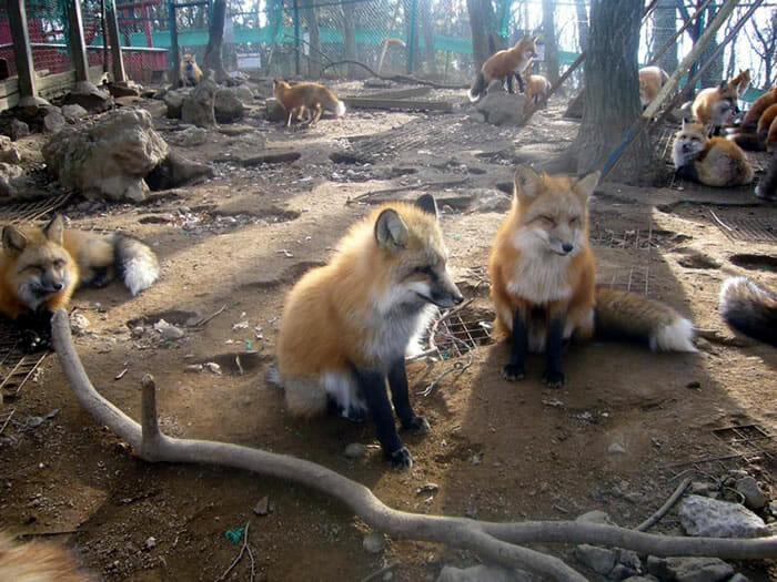 vila-das-raposas-japao_16