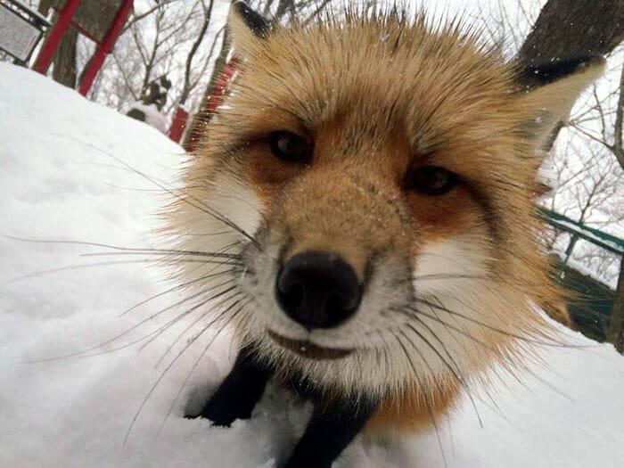 vila-das-raposas-japao_17