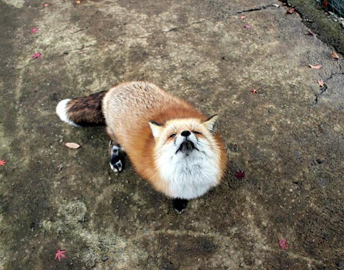 vila-das-raposas-japao_19