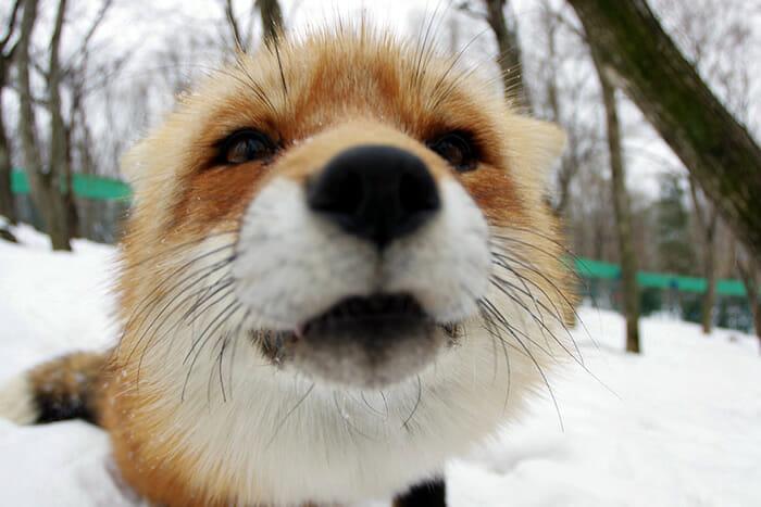 vila-das-raposas-japao_2