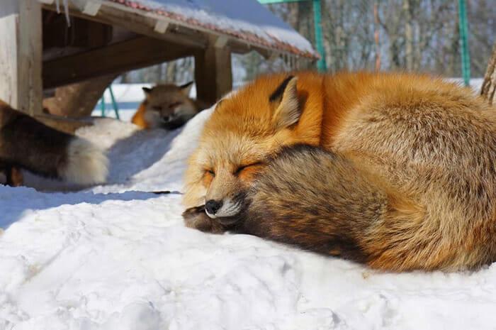 vila-das-raposas-japao_20