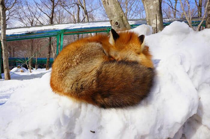 vila-das-raposas-japao_21