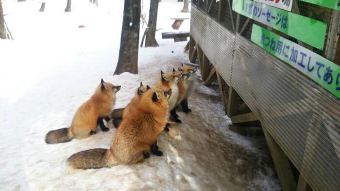vila-das-raposas-japao_22