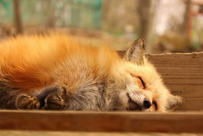 vila-das-raposas-japao_23