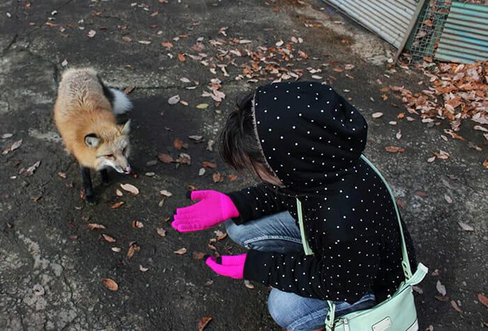 vila-das-raposas-japao_5