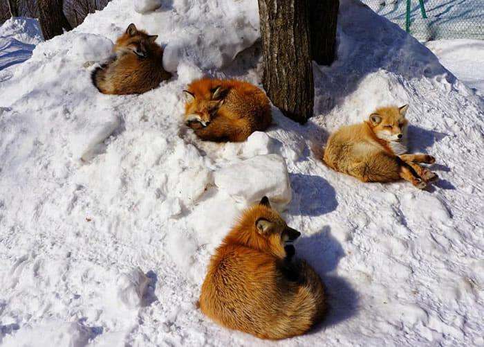 vila-das-raposas-japao_7