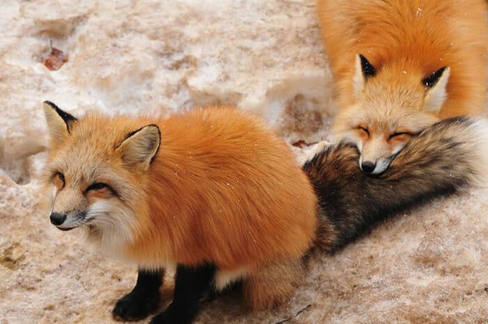 vila-das-raposas-japao_8
