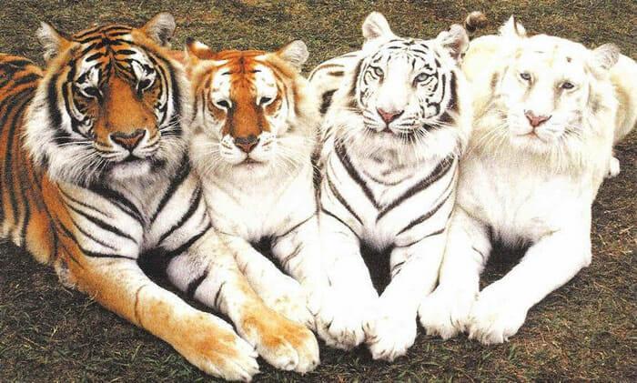 animais-raros-cores-inesperadas-parte-ii_12