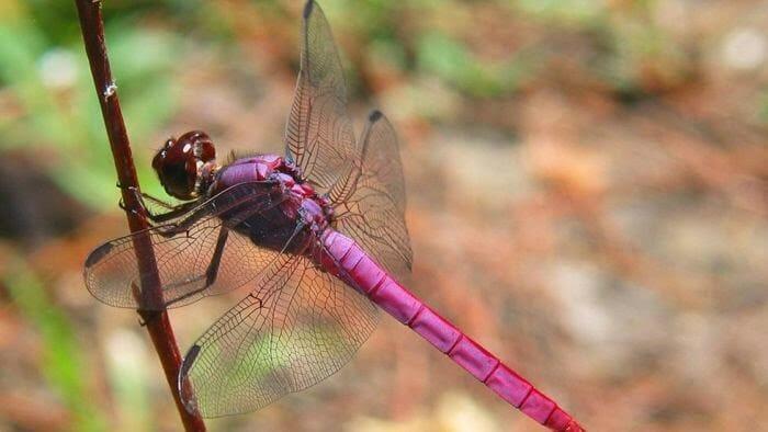 animais-raros-cores-inesperadas-parte-ii_3