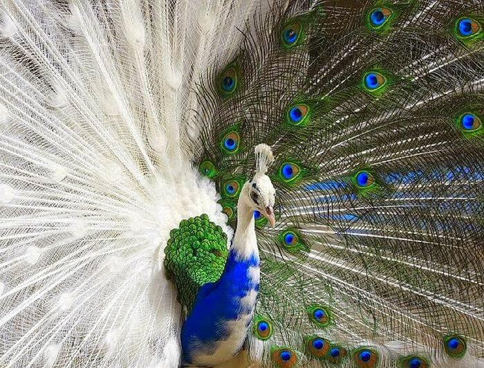 animais-raros-cores-inesperadas-parte-ii_4