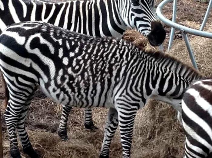 animais-raros-cores-inesperadas-parte-ii_7