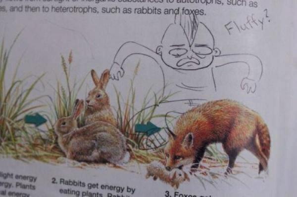 criatividade-em-livros-escolares_8