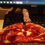 8 Cenas reais que provam que gatos são exímios ladrões de pizza