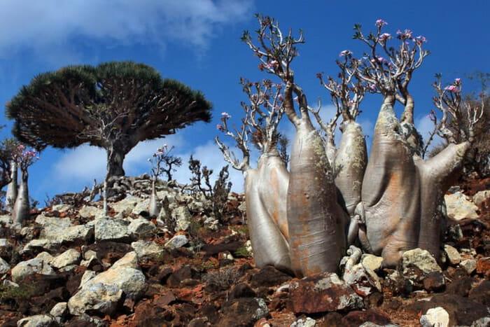 Ilha Socotra - Um pedaço de planeta alienígena localizado na Terra