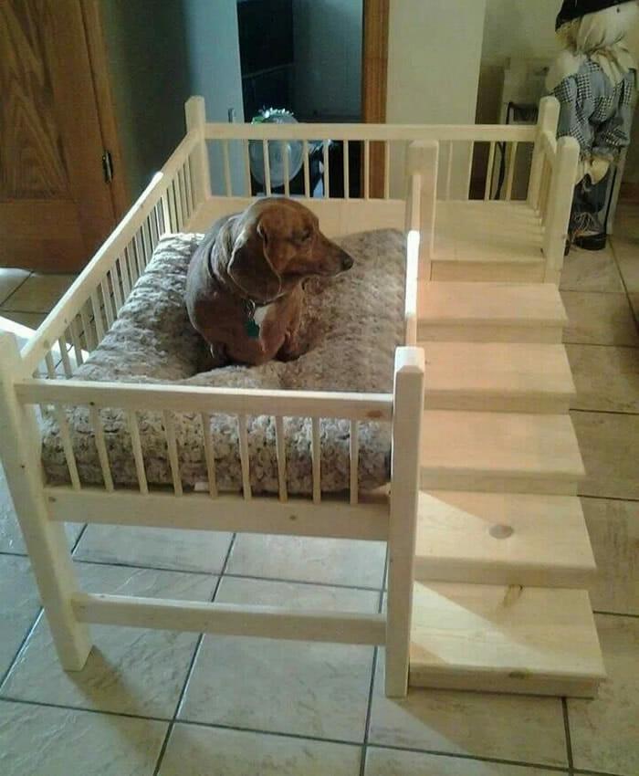 cama-de-cachorro_20