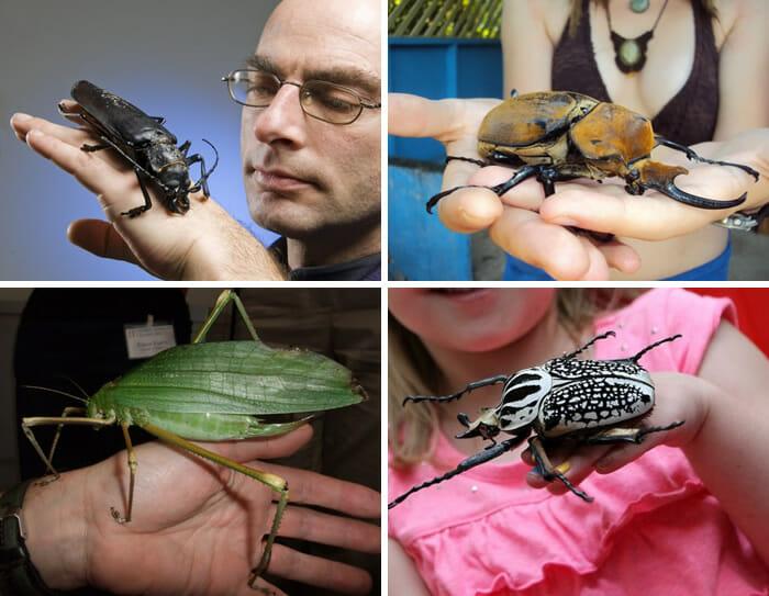 maiores-mais-assustadores-insetos