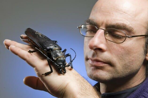 maiores-mais-assustadores-insetos_1