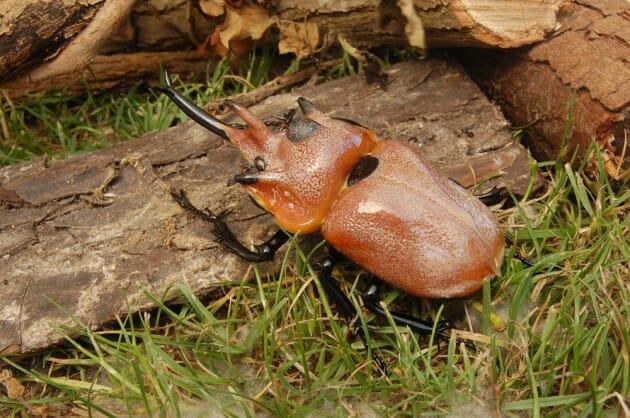 maiores-mais-assustadores-insetos_4