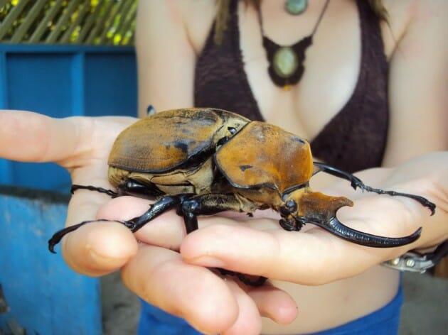 maiores-mais-assustadores-insetos_4b
