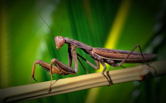 maiores-mais-assustadores-insetos_5