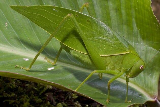 maiores-mais-assustadores-insetos_6