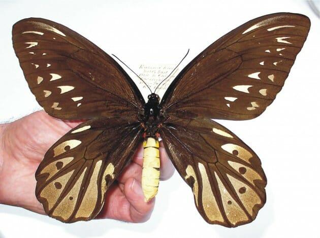 maiores-mais-assustadores-insetos_7