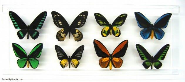 maiores-mais-assustadores-insetos_7b