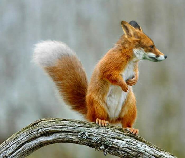 misturas-esquisitas-de-animais_6