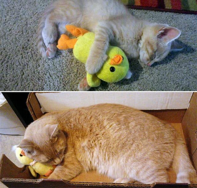 animais-nao-abandoram-seus-brinquedos_12