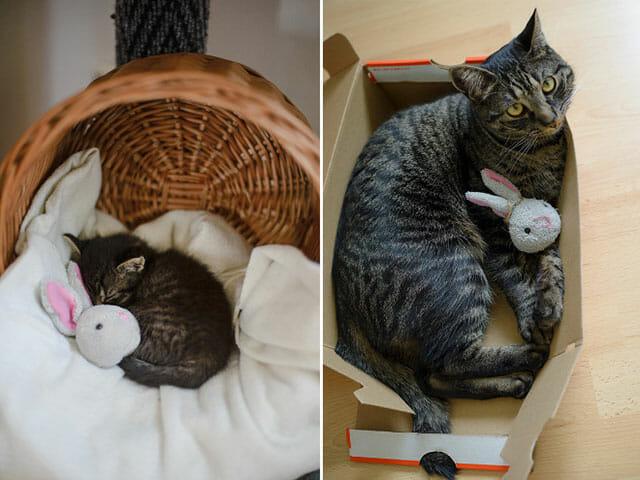 animais-nao-abandoram-seus-brinquedos_2