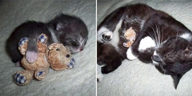 animais-nao-abandoram-seus-brinquedos_4
