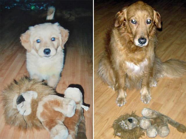 animais-nao-abandoram-seus-brinquedos_7