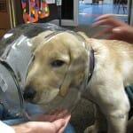 20 Cachorros que se arrependeram instantaneamente de suas decisões