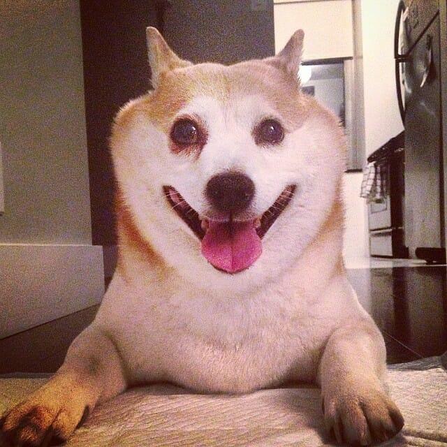 cinnamon-cachorro-mais-feliz-do-mundo_1