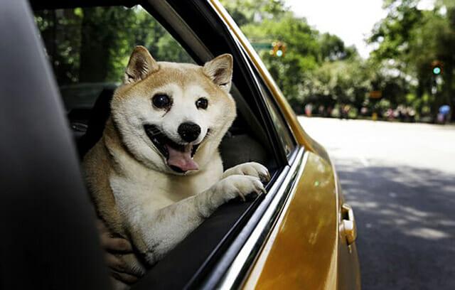 cinnamon-cachorro-mais-feliz-do-mundo_3