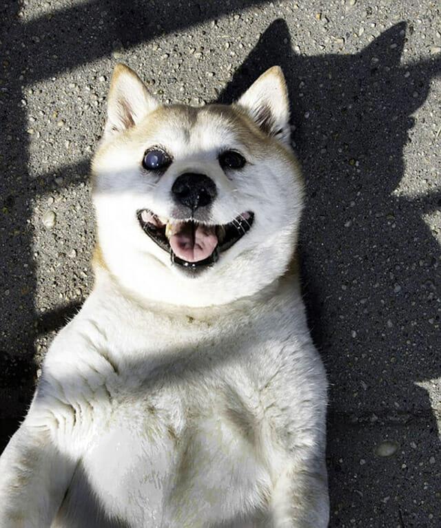 cinnamon-cachorro-mais-feliz-do-mundo_5