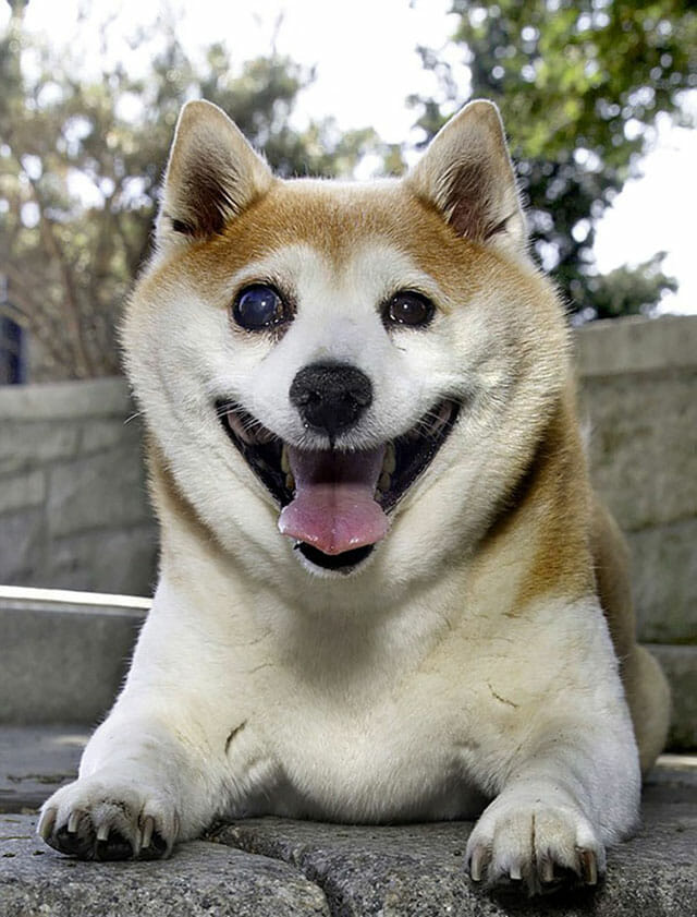 cinnamon-cachorro-mais-feliz-do-mundo_9