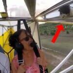 Antes de pilotar seu avião, verifique se não há gatos escondidos nele. Assista ao vídeo e entenda