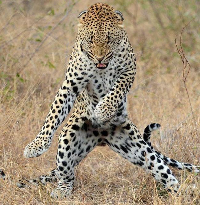 animais-que-dancam-muito-melhor-que-voce_11