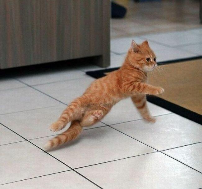 animais-que-dancam-muito-melhor-que-voce_15