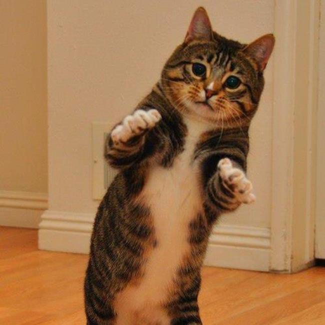 animais-que-dancam-muito-melhor-que-voce_17