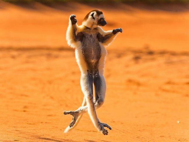 animais-que-dancam-muito-melhor-que-voce_19