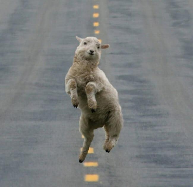 animais-que-dancam-muito-melhor-que-voce_21