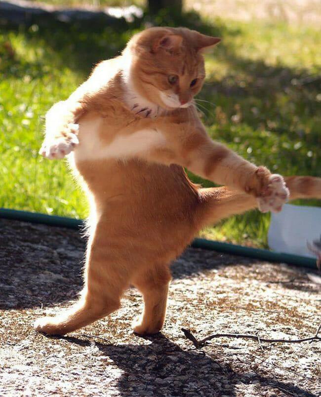 animais-que-dancam-muito-melhor-que-voce_22