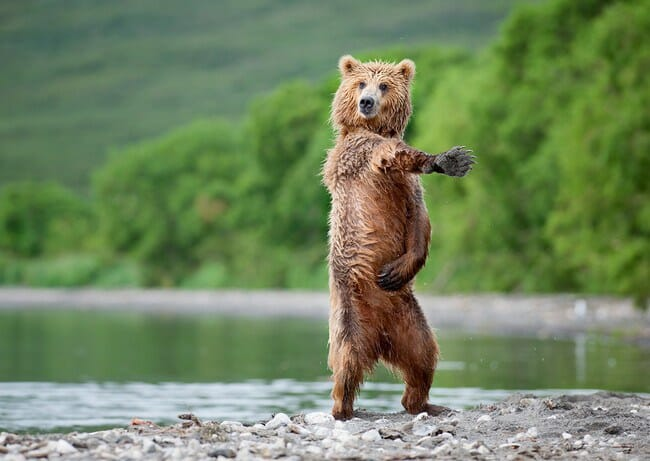 animais-que-dancam-muito-melhor-que-voce_24
