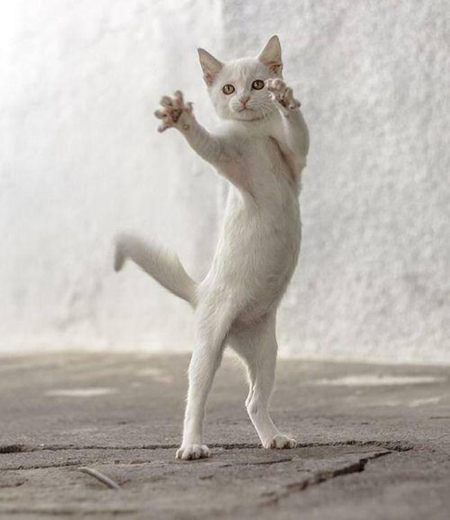 animais-que-dancam-muito-melhor-que-voce_4