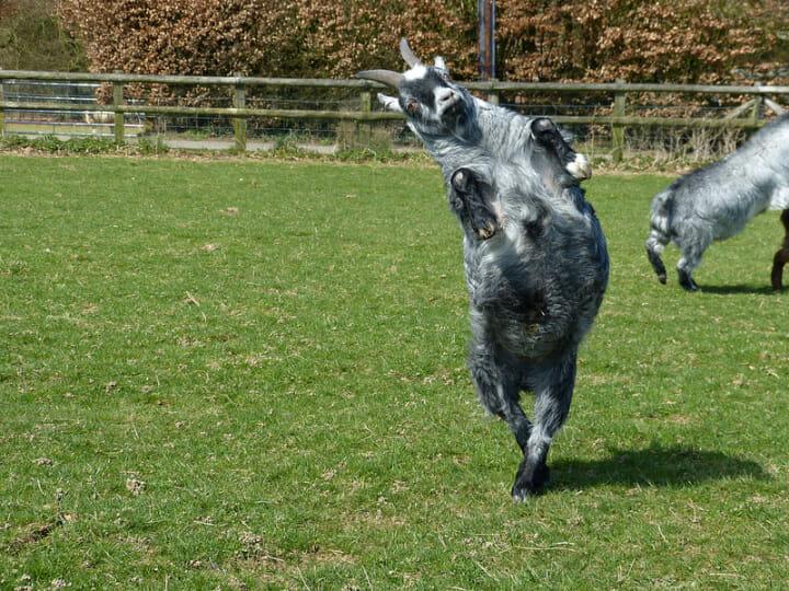 animais-que-dancam-muito-melhor-que-voce_5