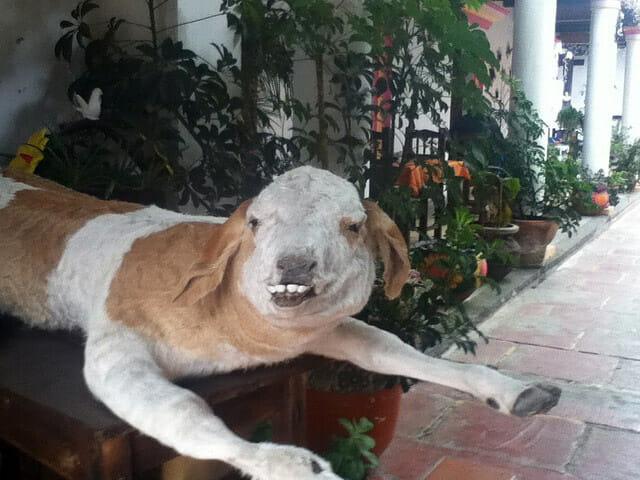 animais-taxidermizados-nao-deram-certo_12