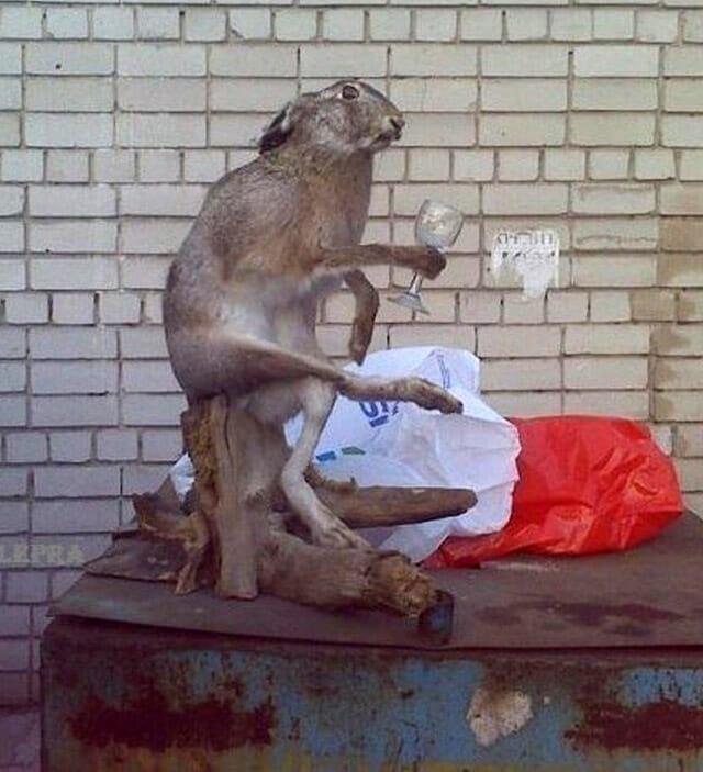 animais-taxidermizados-nao-deram-certo_16