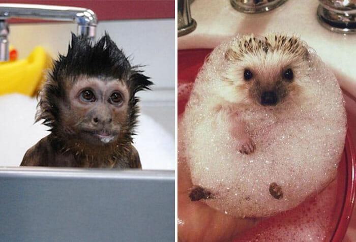 animais-tomando-banho